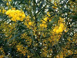 fleurs jaunes dans le jardin extérieur photo