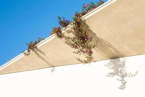 plantes grimpantes en fleurs sur le toit