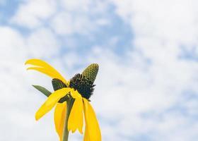 fleurs jaunes dans le ciel photo