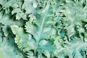 bouquet de feuilles vertes