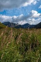 herbe et montagnes pendant la journée photo
