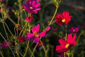 fleurs sauvages dans le colorado