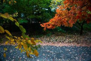 Automne arbres dans Prospect Park, Brooklyn, New York photo