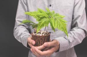 personne tenant une plante