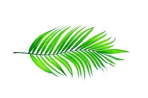 feuille de palmier vert clair photo