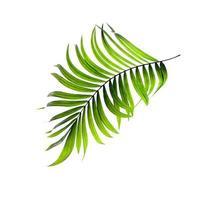 feuille tropicale verte courbée