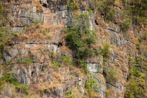 arbres sur la paroi rocheuse