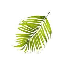 feuille de palmier pleine photo