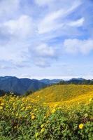 fleurs sur la colline