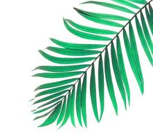 feuille tropicale vert menthe