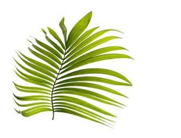 petite feuille tropicale verte