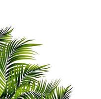 feuilles de palmier vert avec espace de copie