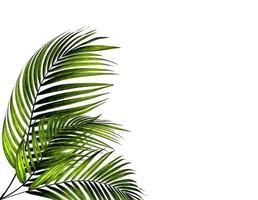 deux feuilles de palmier vertes