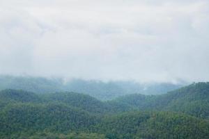 forêt en thaïlande