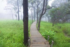 passerelle en bois en thaïlande