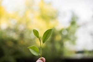 tenant une jeune plante en main