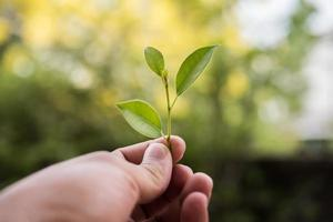 tenant une jeune plante en main photo
