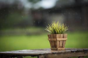 plante verte dans un pot sur une table sous la pluie