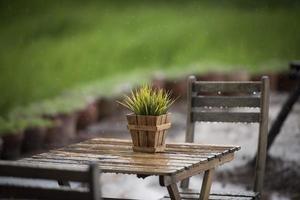 plante verte dans un pot sur une table sous la pluie photo