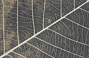 détail de feuilles séchées