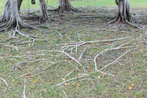 racines d'arbres au sol photo