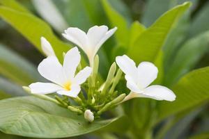 gros plan fleur blanche
