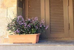 pot de fleur près de la fenêtre photo