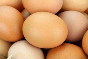 œufs de poule bruns