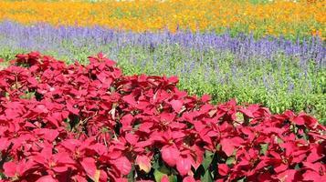 champs de fleurs colorés photo