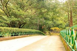 pont piétonnier entouré d'arbres photo