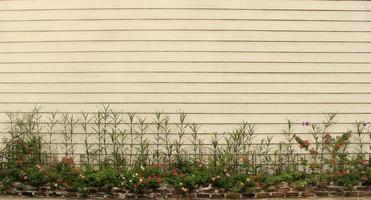 fleurs contre le mur