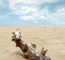 bois flotté dans le sable