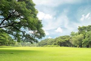 ciel bleu sur l'herbe verte