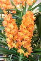 fleurs orange tropicales