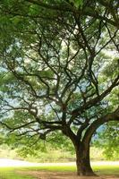 grand arbre à l'ombre photo