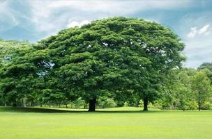grands arbres dans le jardin