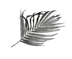 niveaux de gris de feuille de palmier