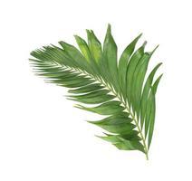 feuilles tropicales vertes courbées photo
