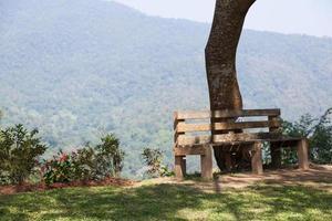 banc en bois sous l'arbre
