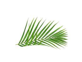 branche de palmier isolé photo