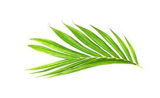 branche tropicale verte vibrante