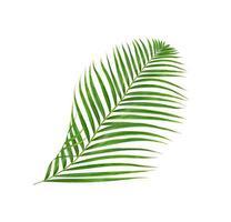 branche de palmier tropical sur blanc photo