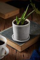 plante en pot sur livre