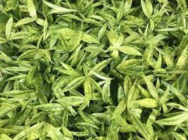 vue de dessus de feuilles vertes photo