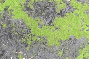 mousse verte brillante sur pierre