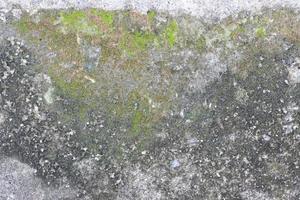 mousse sur la surface de la pierre
