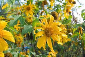 fleurs jaunes sur le terrain photo