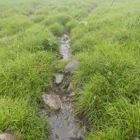 ruisseaux coulant des montagnes
