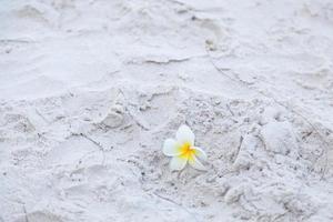 fleur sur le sable sur la plage