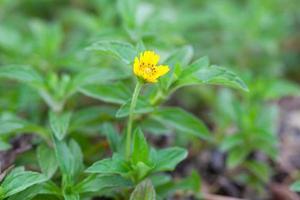 petite fleur jaune dans le parc photo